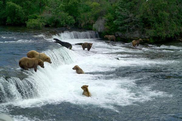 Медведи в парке Катмай на Аляске