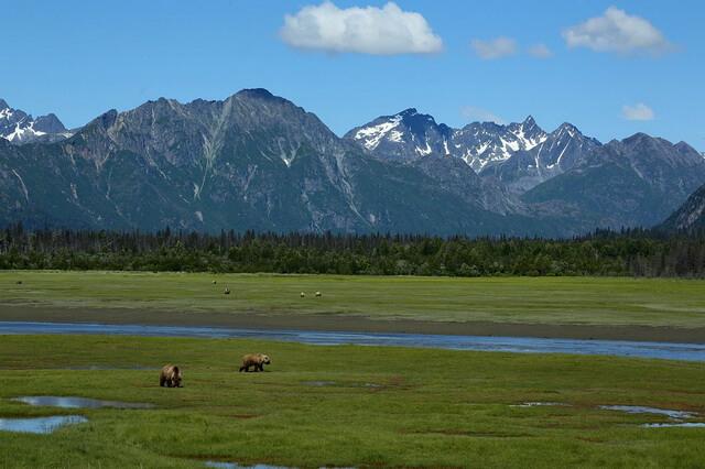 Парк Катмай на Аляске в США и его уникальная дикая природа