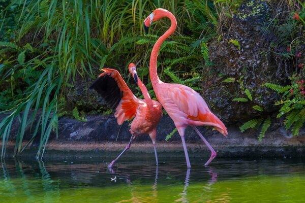 Животные розового цвета - Розовый фламинго