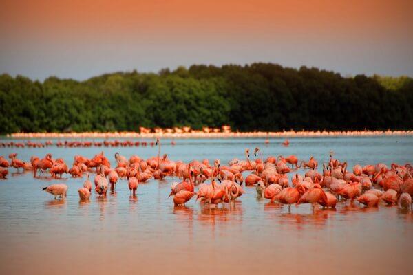 Почему озёра Лас-Колорадас розового цвета