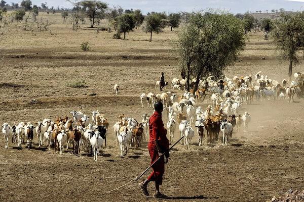 Быт и традиции масаев Африки