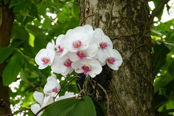 Примеры комменсализма в природе - Орхидеи-эпифиты на деревьях