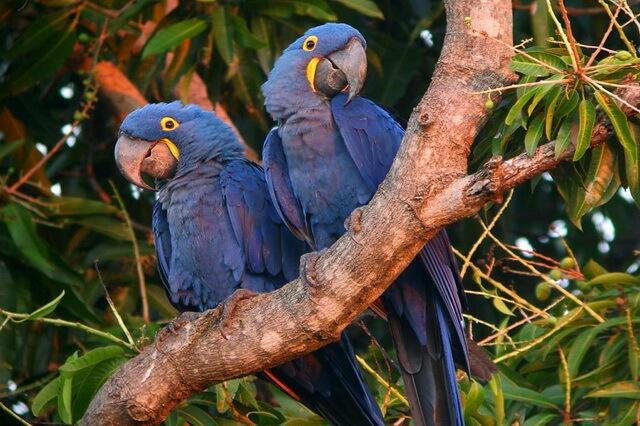 Птицы Бразилии - основные виды с фото и описанием