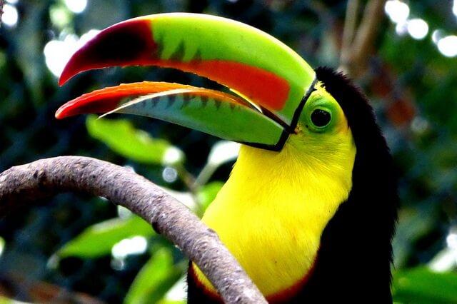 Птицы с удивительными и необычными клювами - фото, названия, описание