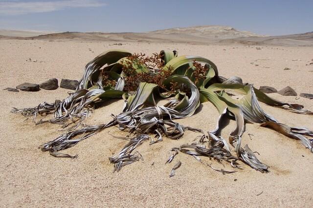 Пустынные растения - уникальная флора пустынь мира