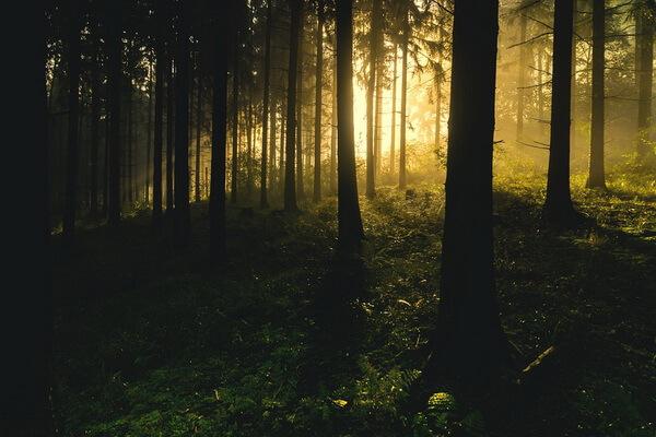 Леса Карелии и их флора