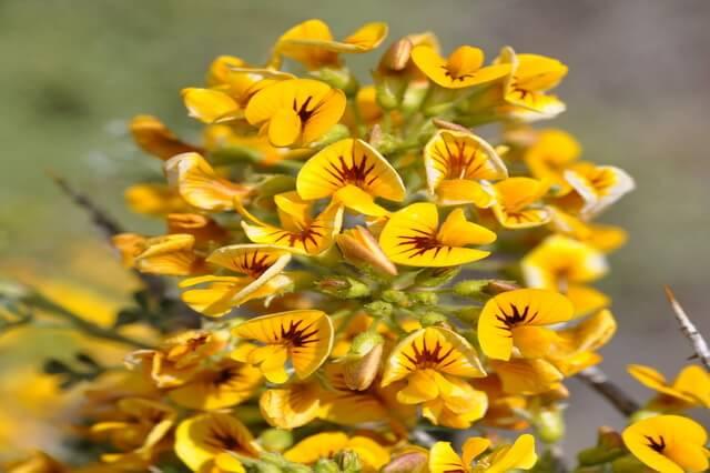 Растения Патагонии в Южной Америке - основная флора с фото и описанием