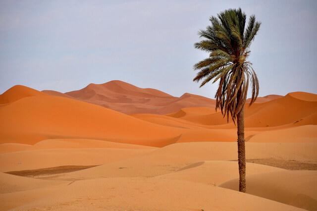 Растения пустыни Сахара - фото с названиями и описанием