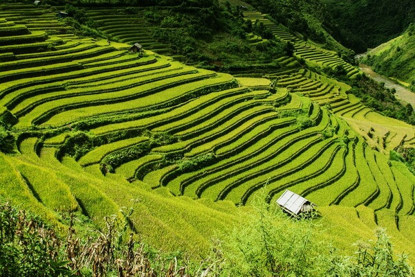 Рисовые террасы Вьетнама - история появления