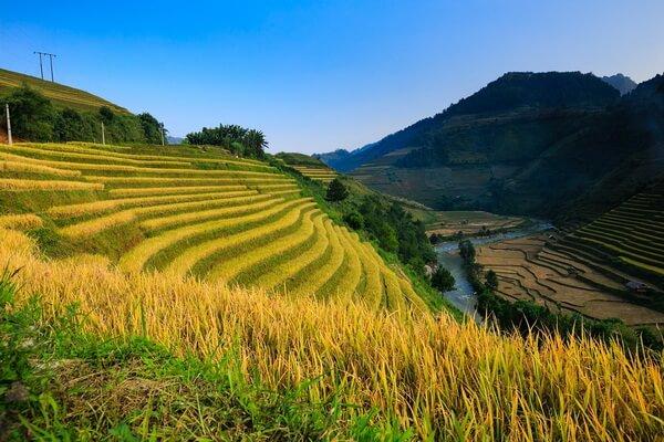 Рисовые поля Вьетнама - красивые фото