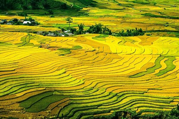 Рисовые террасы Вьетнама - красивые фото