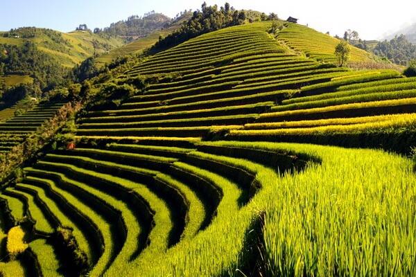 Где находятся рисовые поля Вьетнама