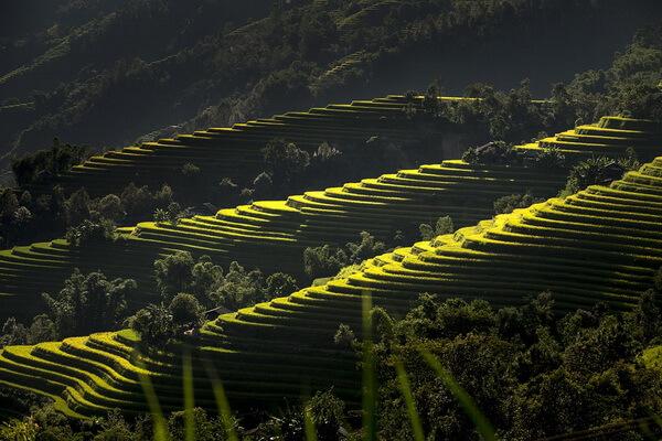 Экскурсии на рисовые поля Вьетнама
