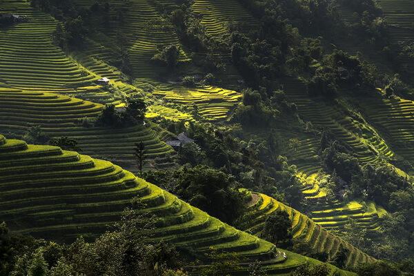 Рисовые террасы Вьетнама - экскурсии для туристов