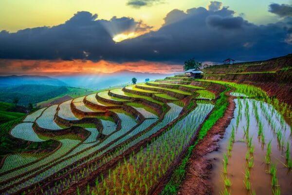 Как добраться на рисовые поля Вьетнама - советы туристам