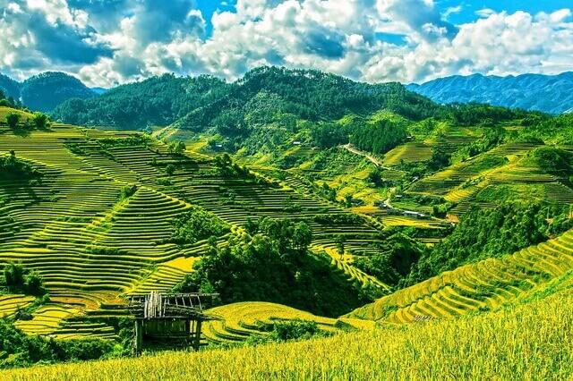 Рисовые поля во Вьетнаме - живописные террасы риса