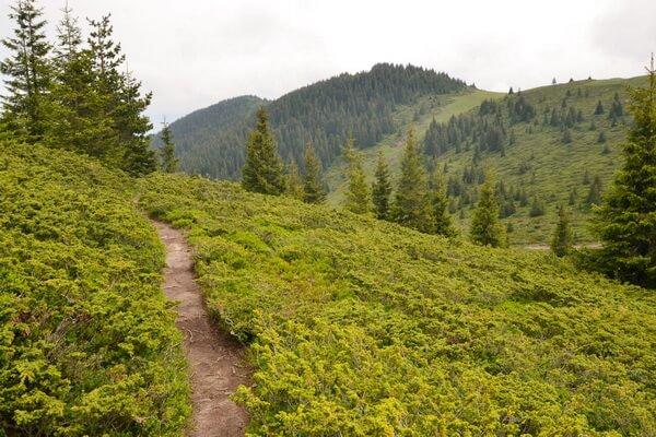 Голям-Перелик - самая высокая вершина Родопских гор в Болгарии