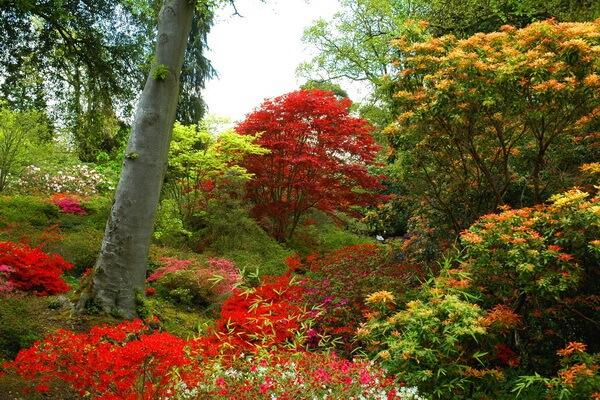 Уникальные сады Эксбери в поместье Ротшильдов в Англии