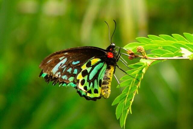 Самые большие бабочки в мире - фото, названия, описание