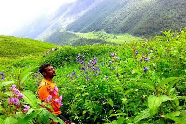 Самые красивые долины с фото и описанием - Долина цветов в Индии