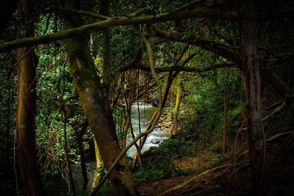 Самые красивые леса в мире с фото и описанием - Тропический лес Амазонки в Южной Америке
