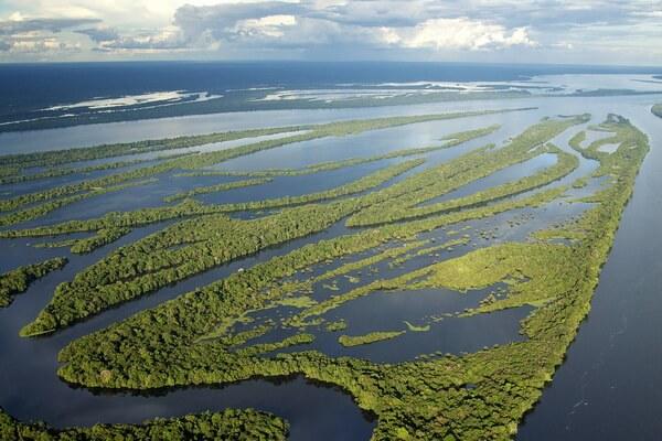 Удивительные леса мира - Джунгли Амазонки