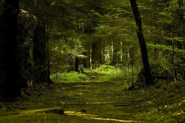 Самые красивые леса в мире с фото и описанием - Шварцвальд или Чёрный лес в Германии