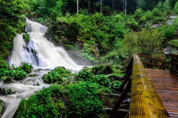 Самые красивые леса в мире - Шварцвальд в Германии
