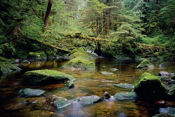 Самые красивые леса в мире с фото и описанием - Тропический лес Большой Медведицы в Британской Колумбии (Канада)