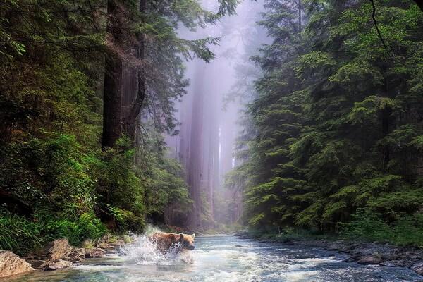 Самые удивительные леса в мире с фото и описанием - Лес Редвуд в США