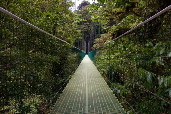 Самые красивые леса в мире с фото и описанием - Облачный лес Монтеверде в Коста-Рике