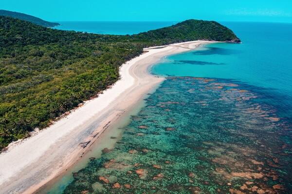 Самые красивые леса в мире с фото и описанием - Тропический лес Дейнтри в Австралии