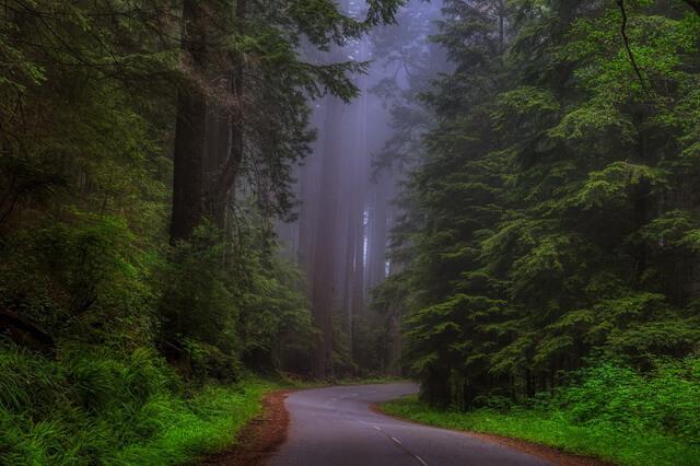 Самые красивые леса в мире - фото, названия, описание