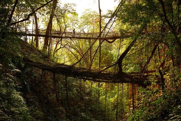 Самые красивые места Индии с фото и описанием - Живые корневые мосты Мегхалая