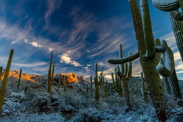 Самые красивые пустыни мира с фото и описанием - Сонора в Северной Америке