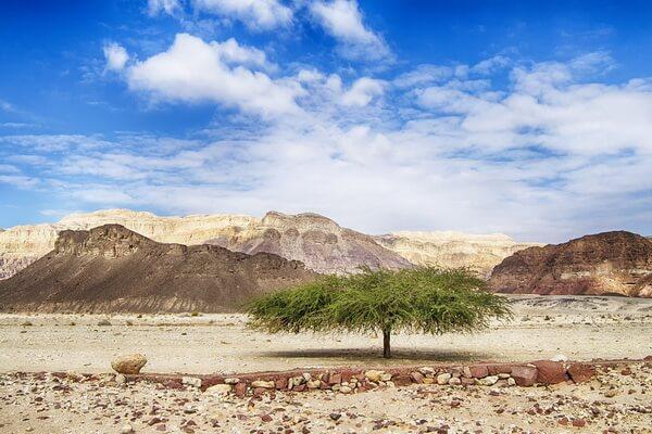 Самые красивые пустыни мира с фото и описанием - Пустыня Симпсон в АвстралииСамые красивые пустыни мира с фото и описанием - Негев в Израиле