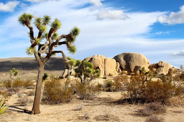 Самые красивые пустыни мира с фото и описанием - Пустыня Симпсон в АвстралииСамые красивые пустыни мира с фото и описанием - Мохаве в США