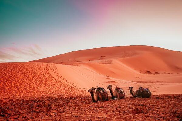 Самые красивые пустыни мира с фото и описанием - Пустыня Сахара в Африке