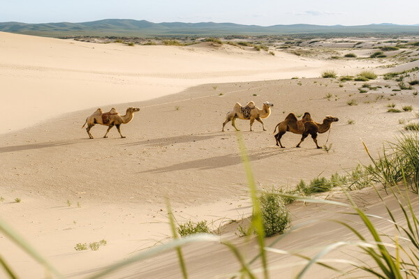 Самые красивые пустыни мира с фото и описанием - Пустыня Гоби в Монголии и Китае