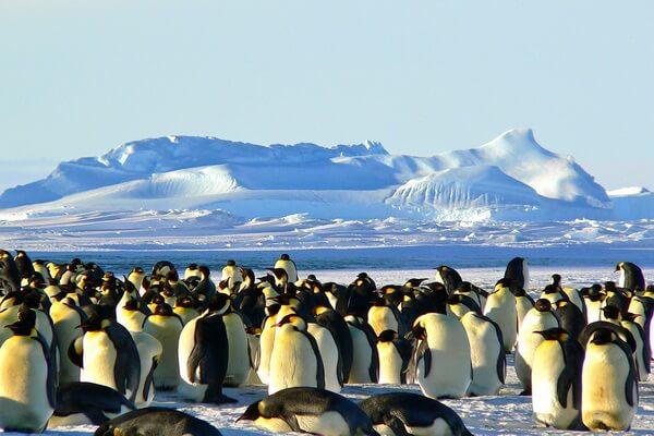 Самые красивые пустыни мира с фото и описанием - Антарктическая пустыня