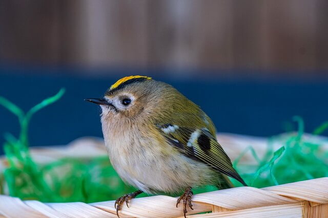 Самые маленькие птицы в мире - фото, названия, описание