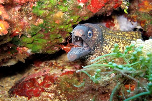 Самые опасные морские животные с фото и описанием - Мурены