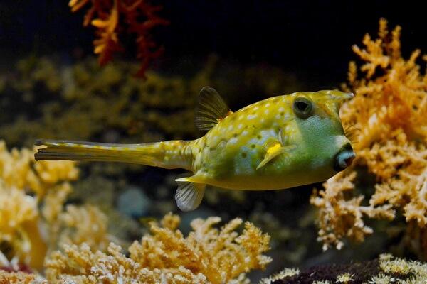 Самые опасные морские животные с фото и описанием - Кузовковые