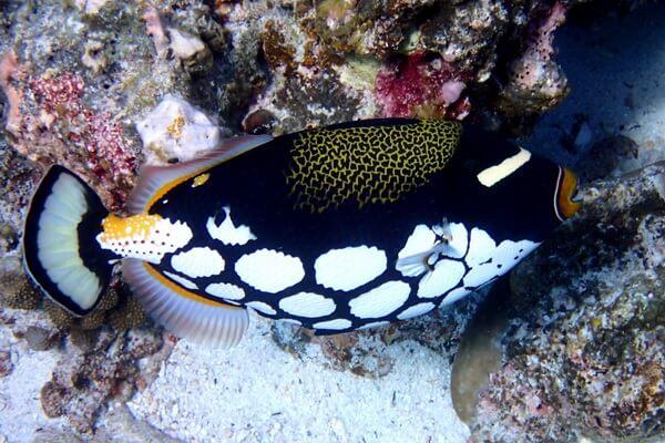 Самые опасные морские животные с фото и описанием - Спинороговые