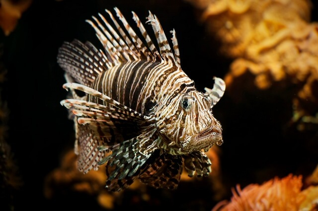 Самые опасные морские животные - фото, названия, описание
