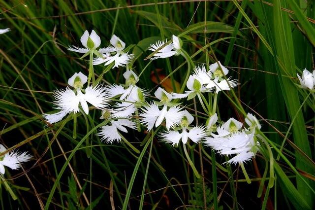 Самые странные цветы - фото, названия, описание