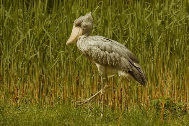 Самые странные птицы - фото, названия, описание