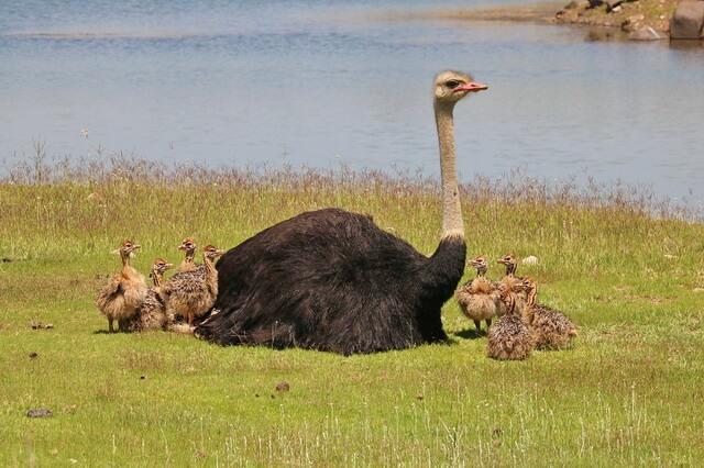 Самые тяжёлые птицы в мире - фото, названия, описание