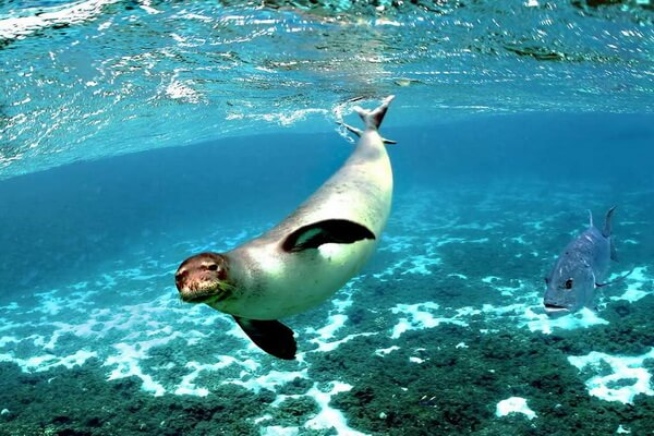 Фауна Греции - Тюлени в морском парке Алонисос