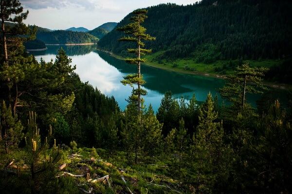 Природные достопримечательности Сербии с фото и описанием - Национальный парк Тара